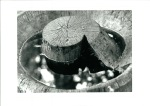 1991-03-04- Souche de chêne Parc de valency Lausanne