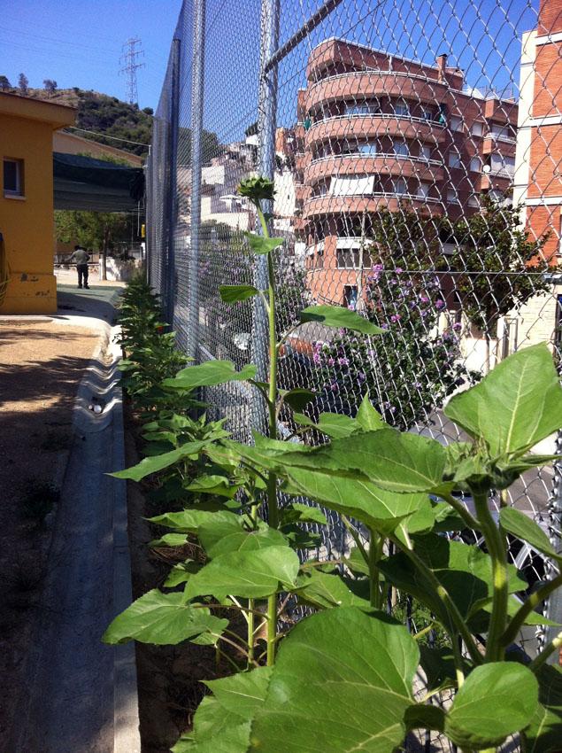 la plantas se desatollan - les plantes se développent