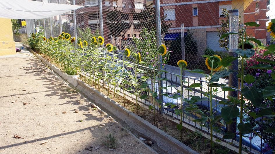 la mayoridad de las flores se abran en el mismo momento... - la majorité des fleurs s'ouvrent au même moment...