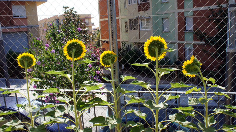 y se encienden con el sol al final del día  - et sont éclairés par le soleil de fin de journée