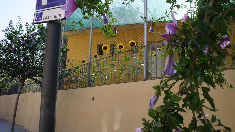 ils entrent en dialogue coloré avec d'autres fleurs - entran en diálogo de colores con otras flores
