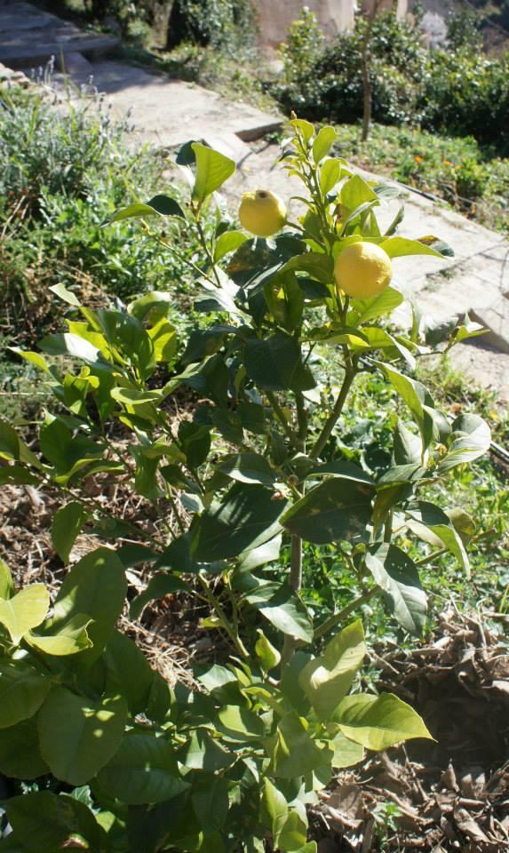 8.03 plantacion arboles