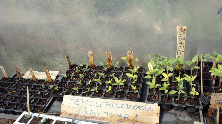 hasta que las primeras plantas son lo suficientemente grandes como para ser trasplantado en el huerto. - jusqu'au moment où les premières plantes sont assez grandes pour être transplantées dans le potager.