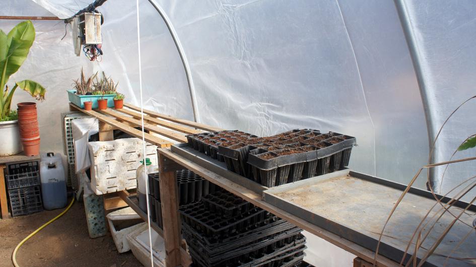 la primera seria de semillas estan plantadas y esperan en el hibernadero - les premières graines sont plantées et attendent dans la serre.