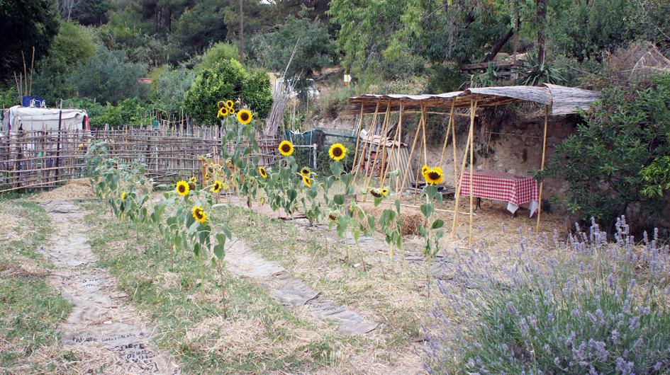 A su pico de floración - la floraison a son pic